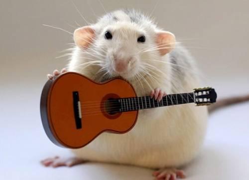 guitar_1448646i